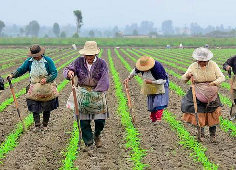 Dirección de Mujer Rural será una realidad en MinAgricultura: Bancada de Mujeres del Congreso